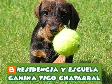 Residencia y escuela canina Pico Chaparral