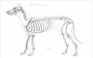 Trabajo sobre las fracturas en perros y su tratamiento