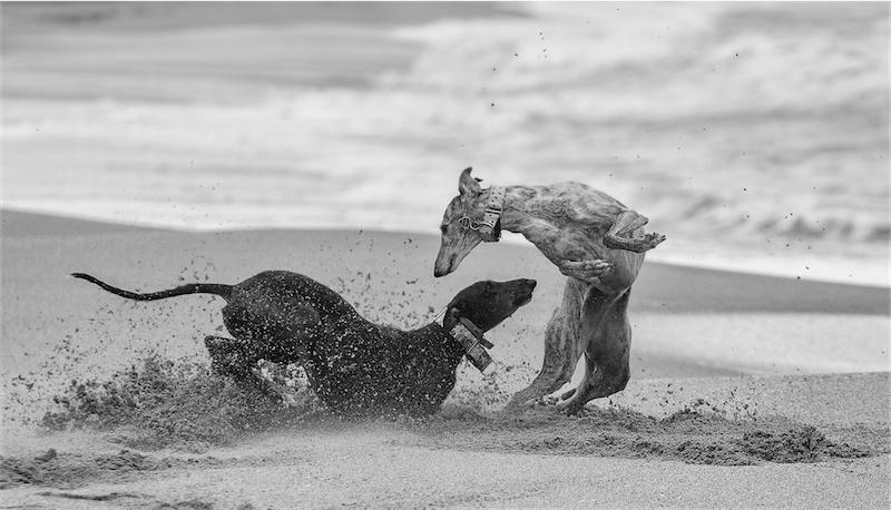 I Desfilada Canina de Platja d'Aro