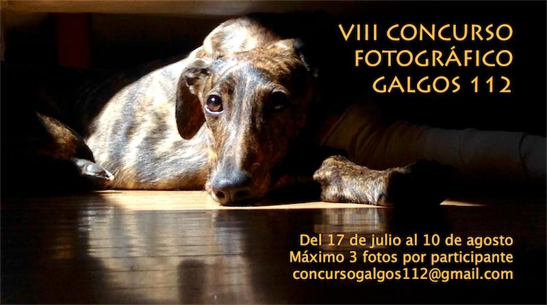 Llega el VIII Concurso Fotográfico de Galgos 112