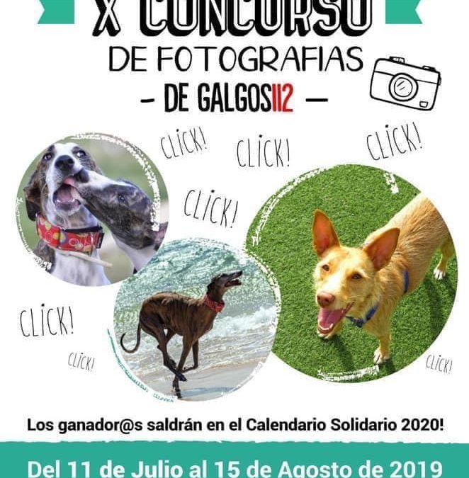 Fotos presentadas al X Concurso Fotográfico de Galgos 112. ¡Socios, a votar!